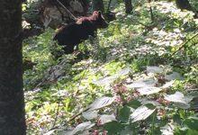 Bear watching slovenia (2)