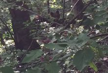 Bear watching slovenia (4)
