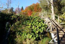 Plitvice lakes croatia (8)