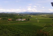 Wine tasting slovenia (7)